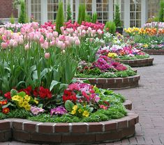 For a little more energy, use warmer colors mixed with some perennials. The plants will fill in as the tulips fade to cover and distract from the browning foliage.