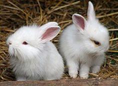 Fuzzy bunnies!
