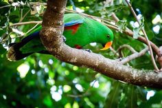 I think he was checking which lens I was using #australiazoo#parrot#green#chelllewinphotography#canon5dmarkiii#canon#bird#treetop by chelllewin_photography http://www.australiaunwrapped.com/