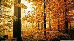 Yellow Autumn Leaves HD desktop wallpaper Widescreen High