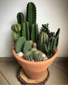 48 Cool Small Cactus Ideas For Home Decoration. The market in cactus house plants is booming and with very good reason. These prickly little guys are great fun, easy to keep and very attractive.