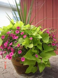 Awesome Container Garden Flowers Ideas For Beginner 18 Container Design, Container Flowers, Container Plants, Gemüseanbau In Kübeln, Small Yard Landscaping, Landscaping Plants, Potato Vines, Pot Jardin, Gardening Zones