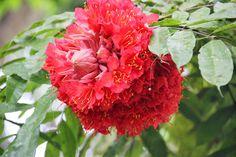 Sri Lanka. Brief Garden