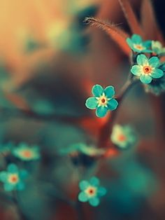 turquoise flowers - would go perfect with our new bedroom design... print like this above my dressing table maybe?