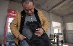 Wang Yan dedica sua vida aos cães necessitados. (Foto: Reprodução / Daily Mail UK)
