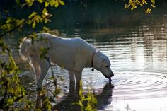 """https://flic.kr/p/5oBUfR 