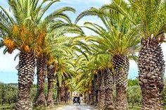 Monterosa. Pelos Algarves, na senda do melhor azeite do mundo...