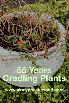 55 Years Cradling Plants - Cindy Goes Beyond Vintage Flowerpot Snake Plant Portulaca Snake Plant, Flower Pots, Garden Design, Backyard, Gardening, Plants, Diy, Vintage, Do It Yourself