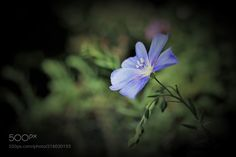 blue beauty -