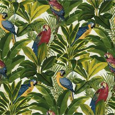 Wonderful tropical parrot wallpaper. Beautiful pink and yellow Macaws perched within a jungle background.