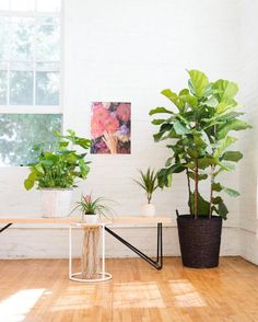 Green Indoor Office Plants  Kerr  Pinterest  Office plants