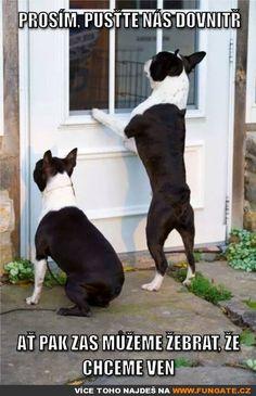 Prosím, pusťte nás dovnitř…