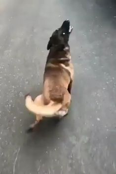 Funny And Cute Dogs 😘😘 Credit: Unknown [Thank you very much! Cute Funny Animals, Cute Baby Animals, Funny Cute, Funny Dogs, Animals And Pets, Cute Dogs, Cute Animal Videos, Funny Animal Pictures, Dog Memes