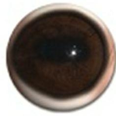 Natural Dark Whitetail Eyes Taxidermy Supplies, White Tail, Eyes, Dark, Natural, Cat Eyes, Nature, Au Natural