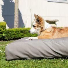 Dog Cushions, Outdoor Dog, Summer Vibes, Corgi, Animals, Corgis, Animales, Animaux, Animal