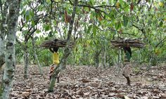 Six men forced into slavery as boys to harvest cocoa pods have a second chance to go after some of the world's biggest chocolate companies in U.S. court, saying the companies should have known their suppliers used forced labor.