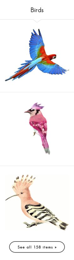 """""""Birds"""" by awsewell ❤ liked on Polyvore featuring bird, birds, animals, birds and butterflies, miscellaneous, red, animals - birds, backgrounds, animali and fillers"""