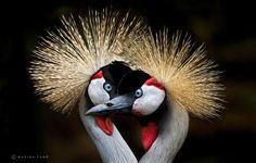 Stunning Photographs Of Wild Animals By Marina Cano