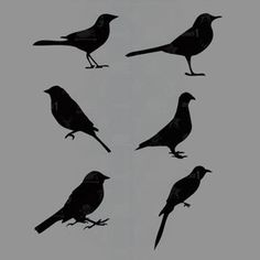 Get Creative With This Set Of 6 Bird Silhouette Stencils Easy To Use