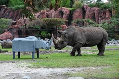 Va. Zoo in Norfolk celebrates World Rhino Day, have zoo guests help build/sign a pledge to help rhino