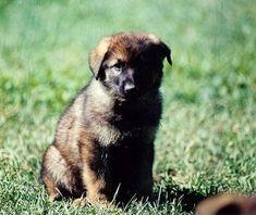 Leerburg | How To Housebreak A Puppy or Older Dog