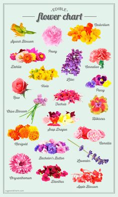 Edible Flower Chart ! Using fresh flowers is one of the easiest ways to decorate a dessert or garnish a cocktail ! So these are the safe pretty edible embellishments perfect for any party.