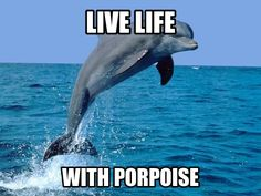 Live life with porpoise! still need to hang the porpoise from Japan Dolphin Memes, Funny Dolphin, Pink Dolphin, Clearwater Marine Aquarium, Funny Animals, Cute Animals, Underwater World, Ocean Life, Marine Life