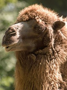 Guess what day it is? It's hump day whoop whoop!!