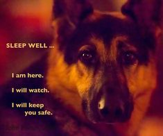 Nothing brings me more peaceful sleep than knowing my German Shepherd is on guard. Out of all the dogs I have had, they are the breed that makes it a duty to be alert and protect every second of their life by their owners side. It seems to be just in them, but not to be taken for granted.