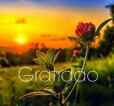 Grande gratidão