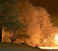 Snow Trees at Night