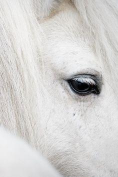 "brazenbvll: "" Real White → (©) """