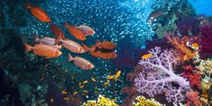 Were Scientists Wrong About Reefs?