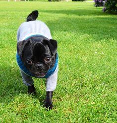 Türkis/Grau geschützt durch die kühlen Tage. #OTELLOONLINE #DOGJUMPER #HUNDEPULLOVER Dog Sweaters, French Bulldog, Dogs, Animals, Heroes, Gray, Animais, Animales, Animaux