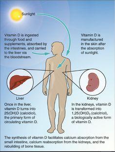 Vitamin D3: The Forgotten Hormone: https://www.postwaves.com/posts/group/5044590361/nutrition
