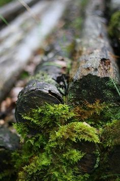 Find images and videos about nature, green and forest on We Heart It - the app to get lost in what you love. Foto Macro, Nature Sauvage, Forest Floor, All Nature, Walk In The Woods, Mother Earth, Beautiful World, The Great Outdoors, Woodland