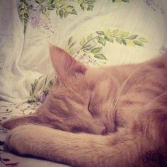 Il riposo di Teodoro #teodoroamoremio #teodoromylove #beautifulcat #