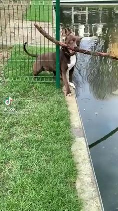 Raining Cats And Dogs, Funny Cats And Dogs, Cute Dogs And Puppies, Doggies, Funny Animal Videos, Cute Funny Animals, Funny Videos, Funny Facts, Funny Signs
