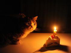 Happy Birthday, Maru!