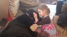 Why is there a cow in the house? This little girl's excuse is too cute