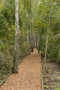 Hans Baluschek Park, Berlin, Germany: The old railways overtaken by trees are made into paths