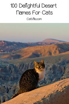 If you're looking for some of the best desert names for cats, then this list will help you make a choice! Check out 100 ideas we adore! Names For Male Cats, Female Names, Cat Names, Desert Names, Persian Names, Welsh Names, Mexican Desert, Arizona City