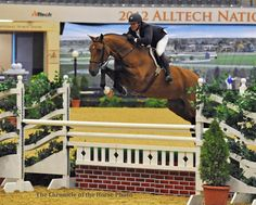 Greg Crolick and Carson in the High Performance Hunter division-2012 Alltech National Horse Show