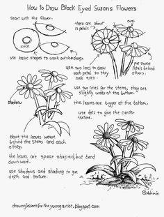 How To Draw Black Eyed Susan Flowers, Free Worksheet