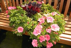 Wondering how to perk up your container plantings and hanging baskets? This article from BC Home and Garden Magazine shows you how to freshen them up in no time.   http://emfl.us/OcFd