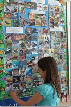 animal classification wall
