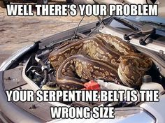 A couple discovered a huge python hitching a ride in their car. The slithery squatter sneaked underneath the bonnet of Marlene Swart and Leon Swanepoel's car while they were on holiday at the Kruger National Park in South Africa. Car Jokes, Car Humor, Driving Humor, Animal Memes, Funny Animals, Animal Humor, Crazy Animals, Giant Animals, Animal Antics
