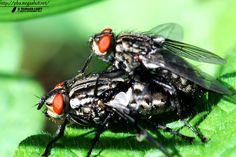 flies love