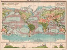 World Vegetation Ocean Currents Vertical Distribution of Vegetation 1901 Map Antique World Map, Antique Maps, Vintage World Maps, Ocean Current, Worlds Largest, Antiques, Ebay, Old Maps, Antiquities