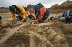 Mammoth skeleton accidentally discovered in October 2012 during excavation of an ancient Roman site near Paris.